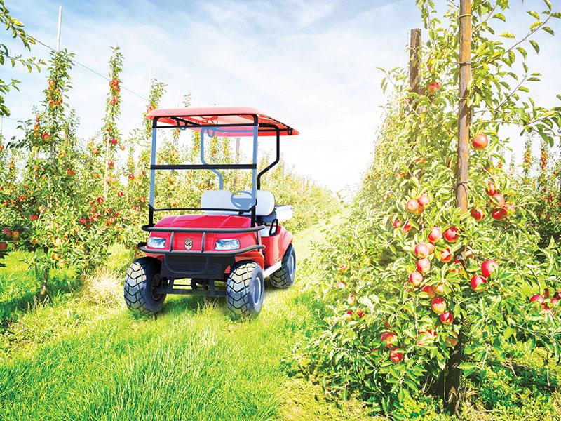 Al lavoro nei frutteti